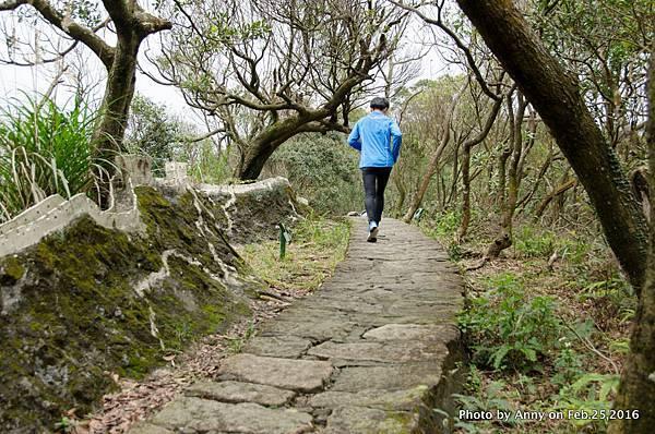 鯉魚山步道5.jpg