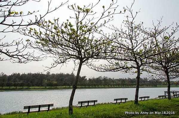 台東森林公園 活水湖 22.jpg