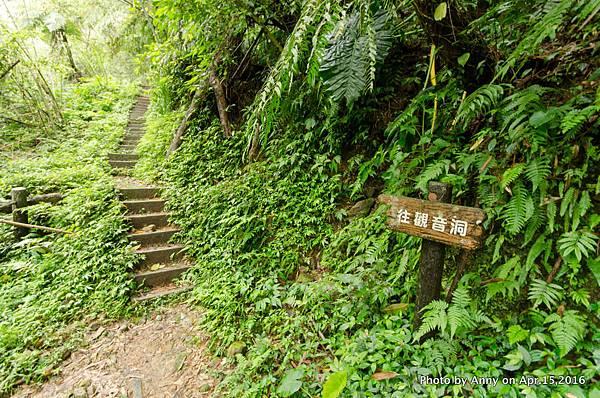 桃園觀音洞步道2.jpg