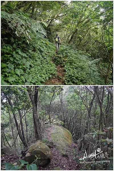 石碇山林迷途記3.jpg
