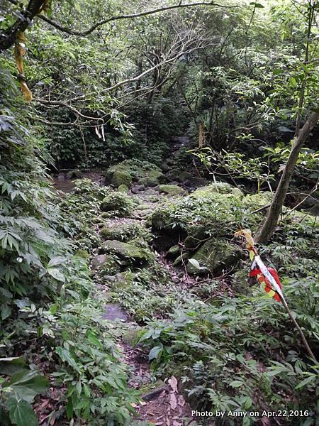 石碇山林迷途記9.JPG