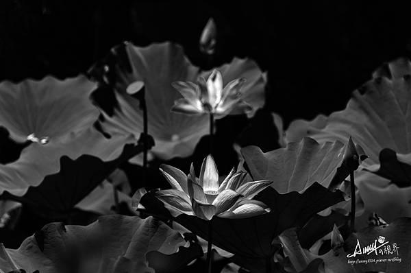 暗黑中的鑽石.jpg