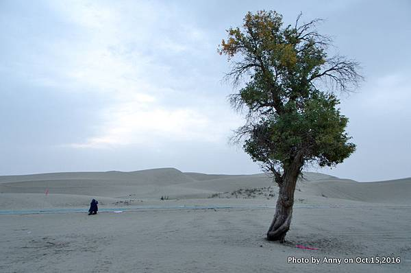 塔克拉瑪干沙漠騎駱駝5.jpg