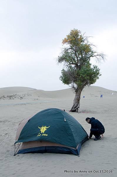 塔克拉瑪干沙漠騎駱駝4.jpg