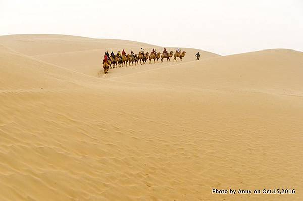 塔克拉瑪干沙漠騎駱駝9.jpg