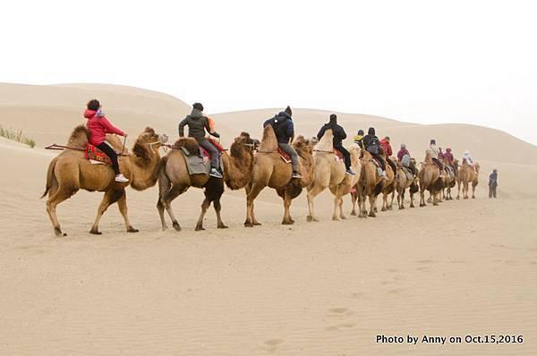 塔克拉瑪干沙漠騎駱駝7.jpg