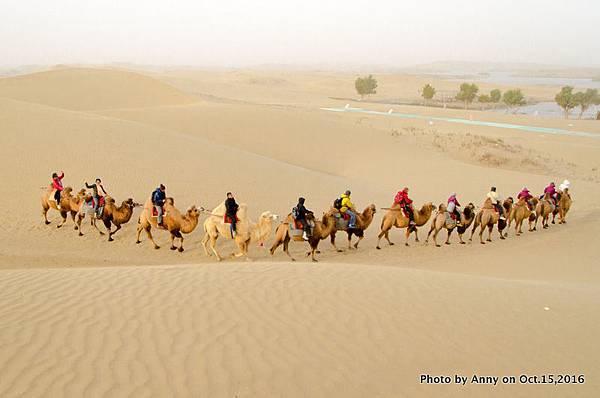 塔克拉瑪干沙漠騎駱駝11.jpg
