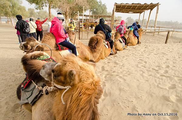 塔克拉瑪干沙漠騎駱駝14.jpg