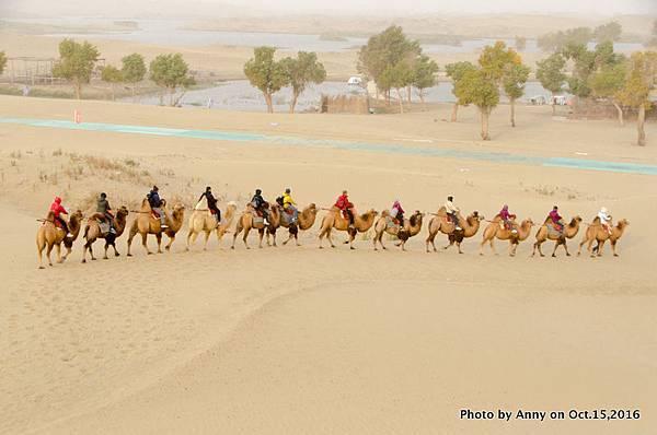 塔克拉瑪干沙漠騎駱駝13.jpg