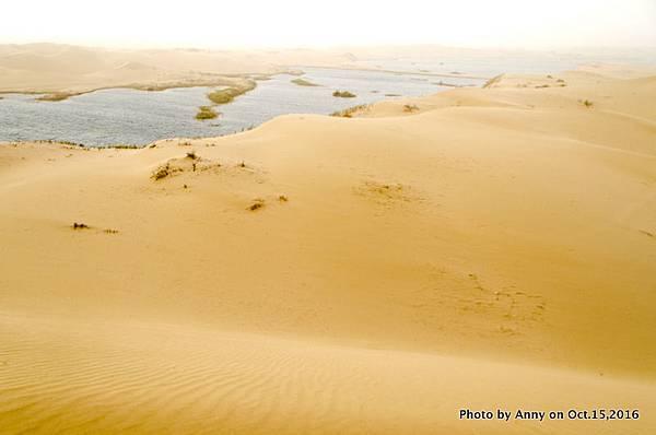 塔克拉瑪干沙漠騎駱駝21.jpg