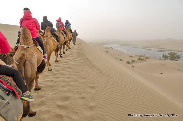 塔克拉瑪干沙漠騎駱駝20.jpg