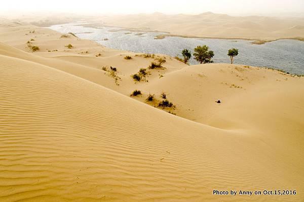 塔克拉瑪干沙漠騎駱駝22.jpg