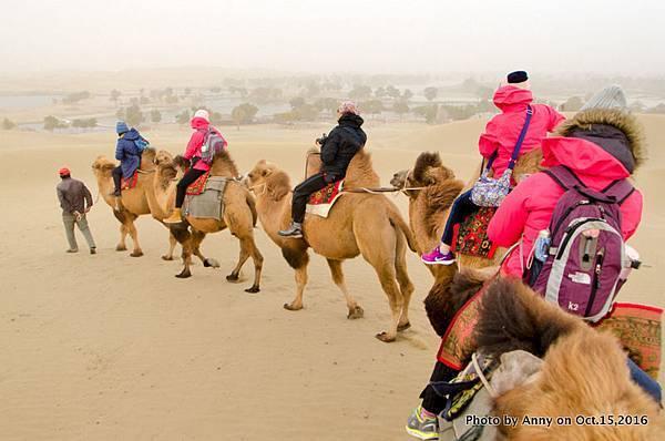 塔克拉瑪干沙漠騎駱駝24.jpg