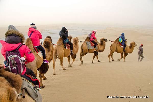 塔克拉瑪干沙漠騎駱駝25.jpg