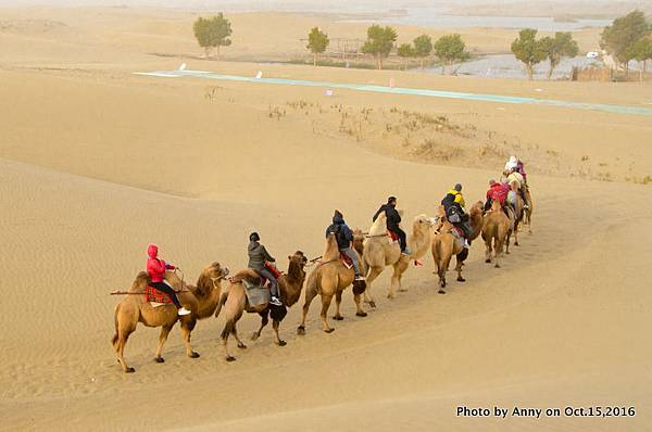 塔克拉瑪干沙漠騎駱駝.jpg