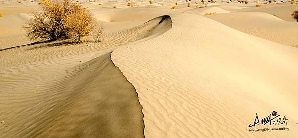 塔克拉瑪干沙漠23.jpg
