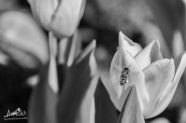 早起的蜂有蜜採.jpg