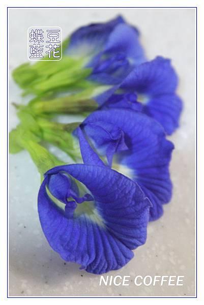 IMG_7122藍花.jpg