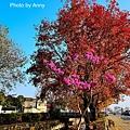 楓樹社區24.jpg
