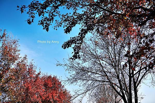 楓樹社區33.jpg