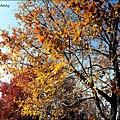 楓樹社區47.jpg