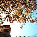 楓樹社區a1.jpg
