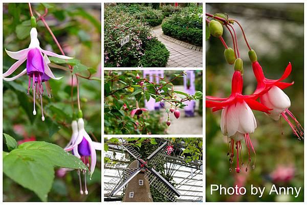 花園5.jpg