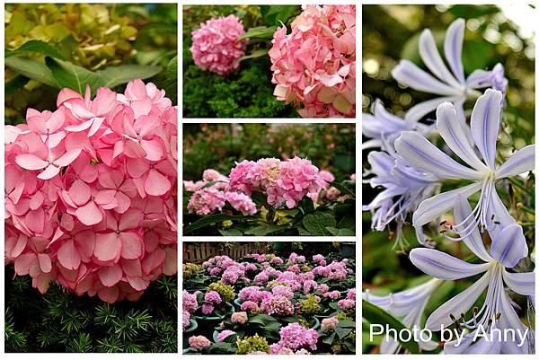 花園6.jpg