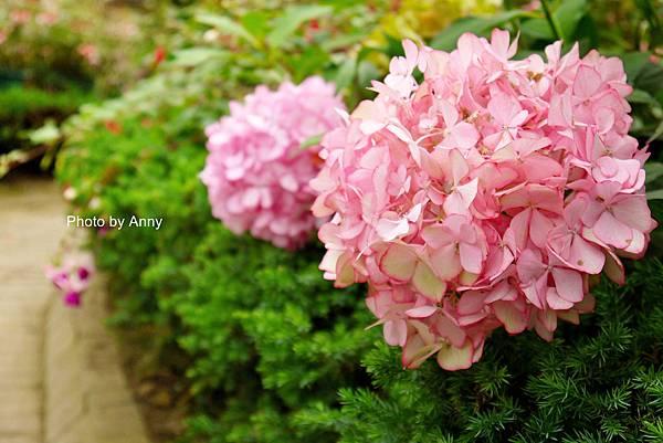 花園7.jpg