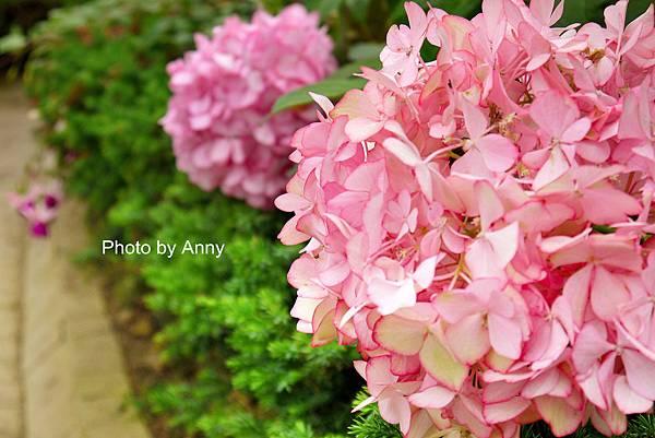 花園8.jpg