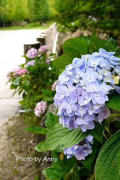 花園12.jpg