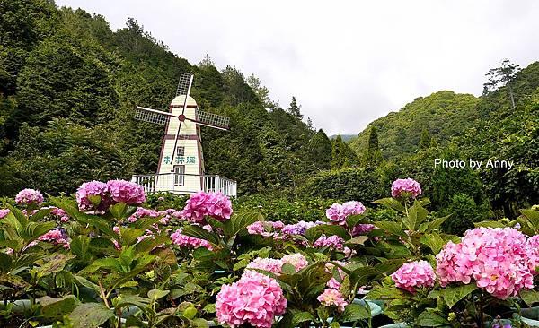 花園16.jpg