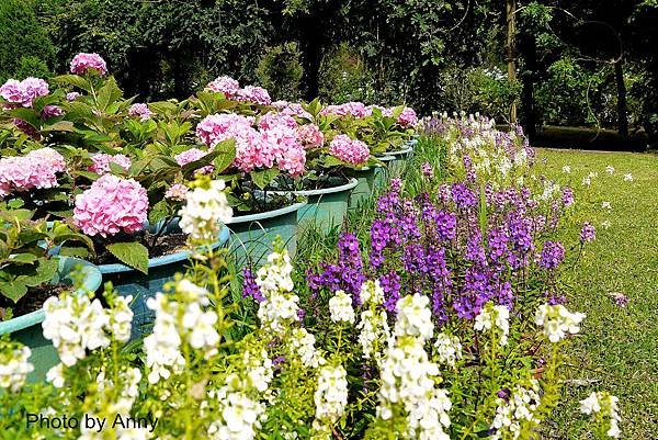 花園18.jpg