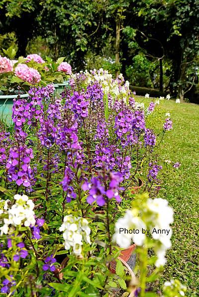 花園19.jpg