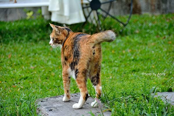 九樹cat2.jpg