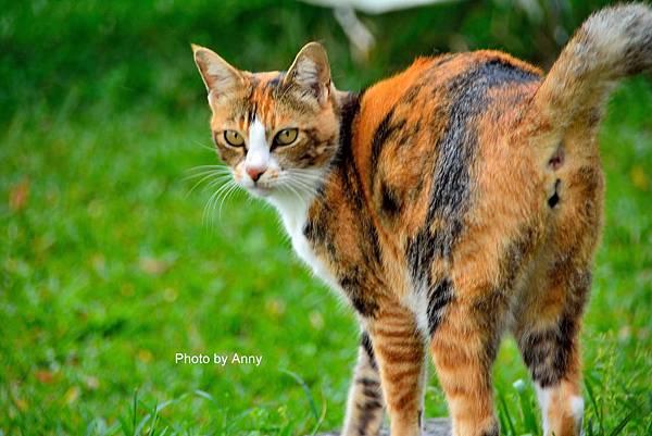 九樹cat3.jpg