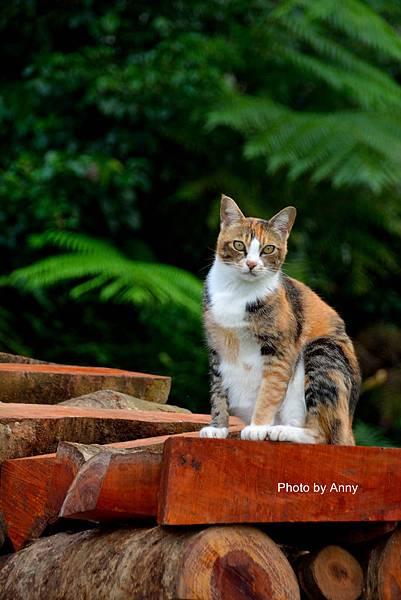 九樹cat4.jpg