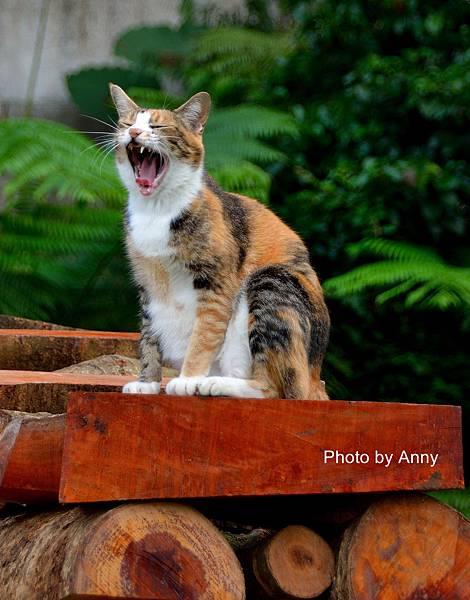 九樹cat5.jpg