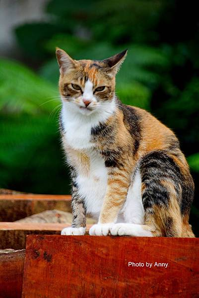 九樹cat6.jpg