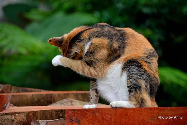 九樹cat7.jpg