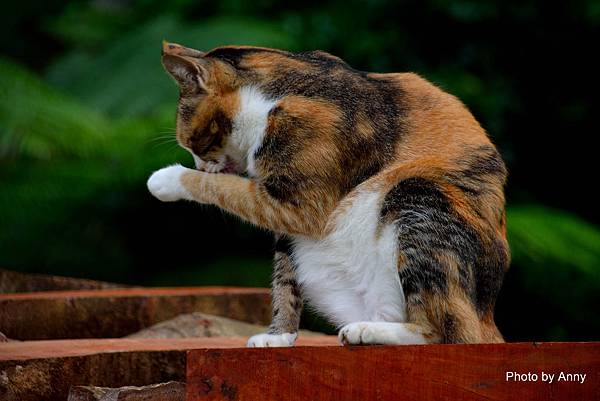 九樹cat8.jpg