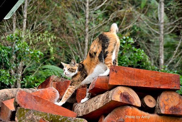 九樹cat9.jpg