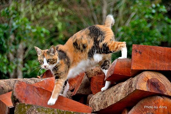 九樹cat10.jpg