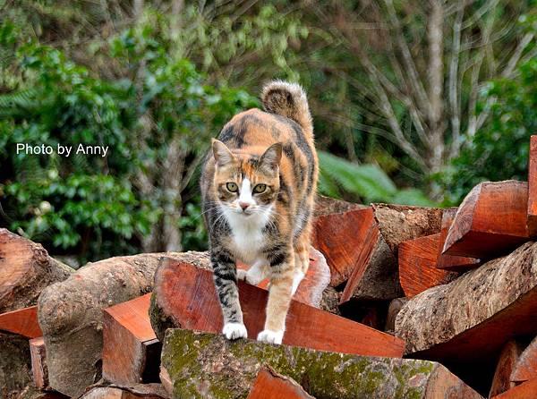 九樹cat11.jpg