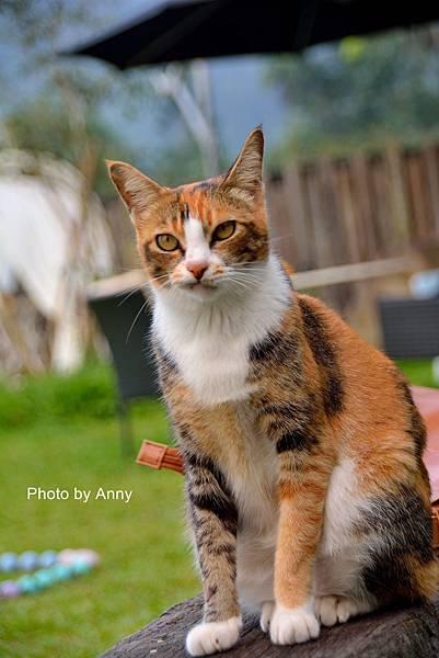 九樹cat14.jpg