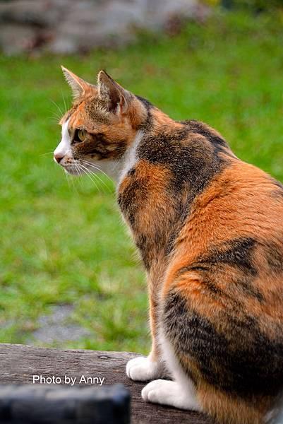 九樹cat15.jpg