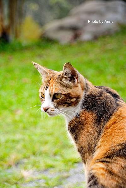 九樹cat16.jpg