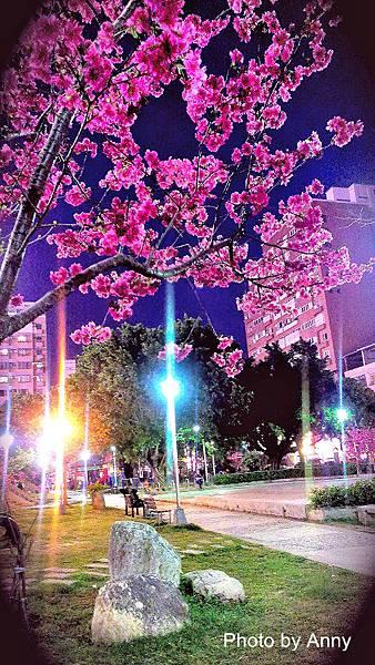 夜櫻13.jpg
