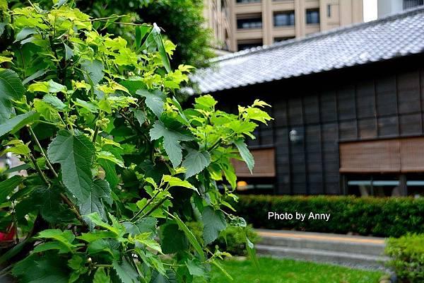 新竹a24.jpg