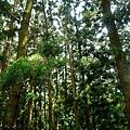 樹木園12